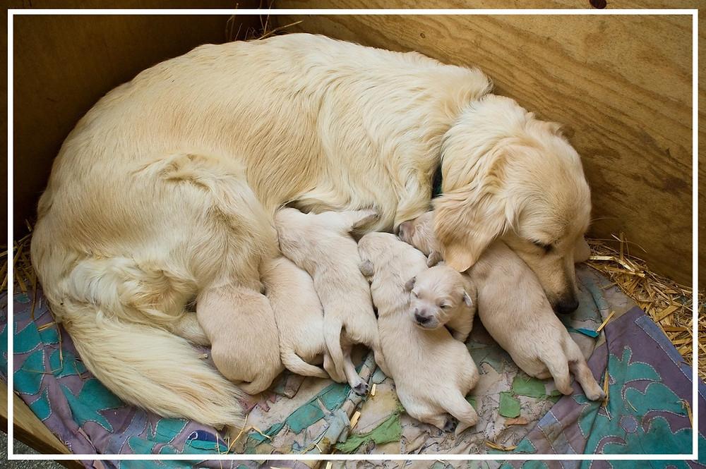 vom neugeborenen Welpen zum erwachsenen Hund I