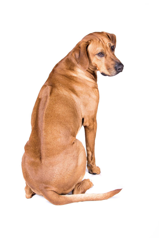 Körpersprache der Hunde VII