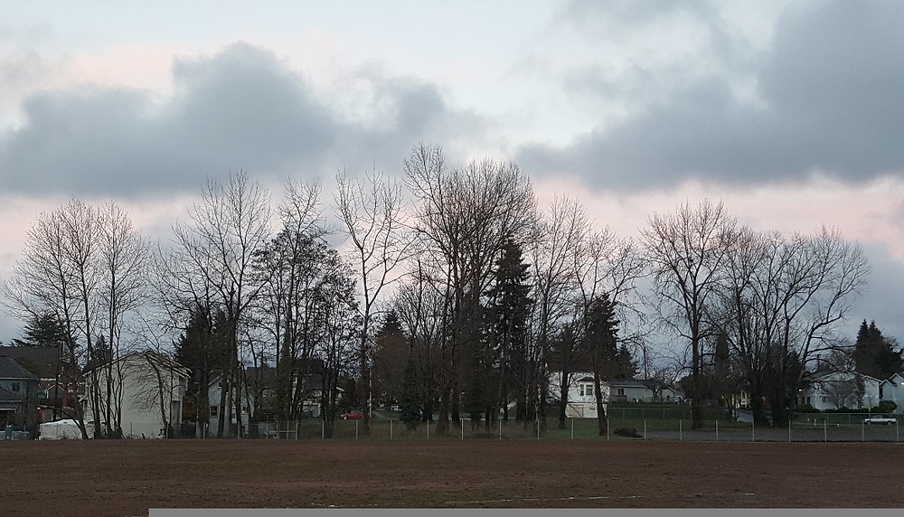 Trees_and_Clouds