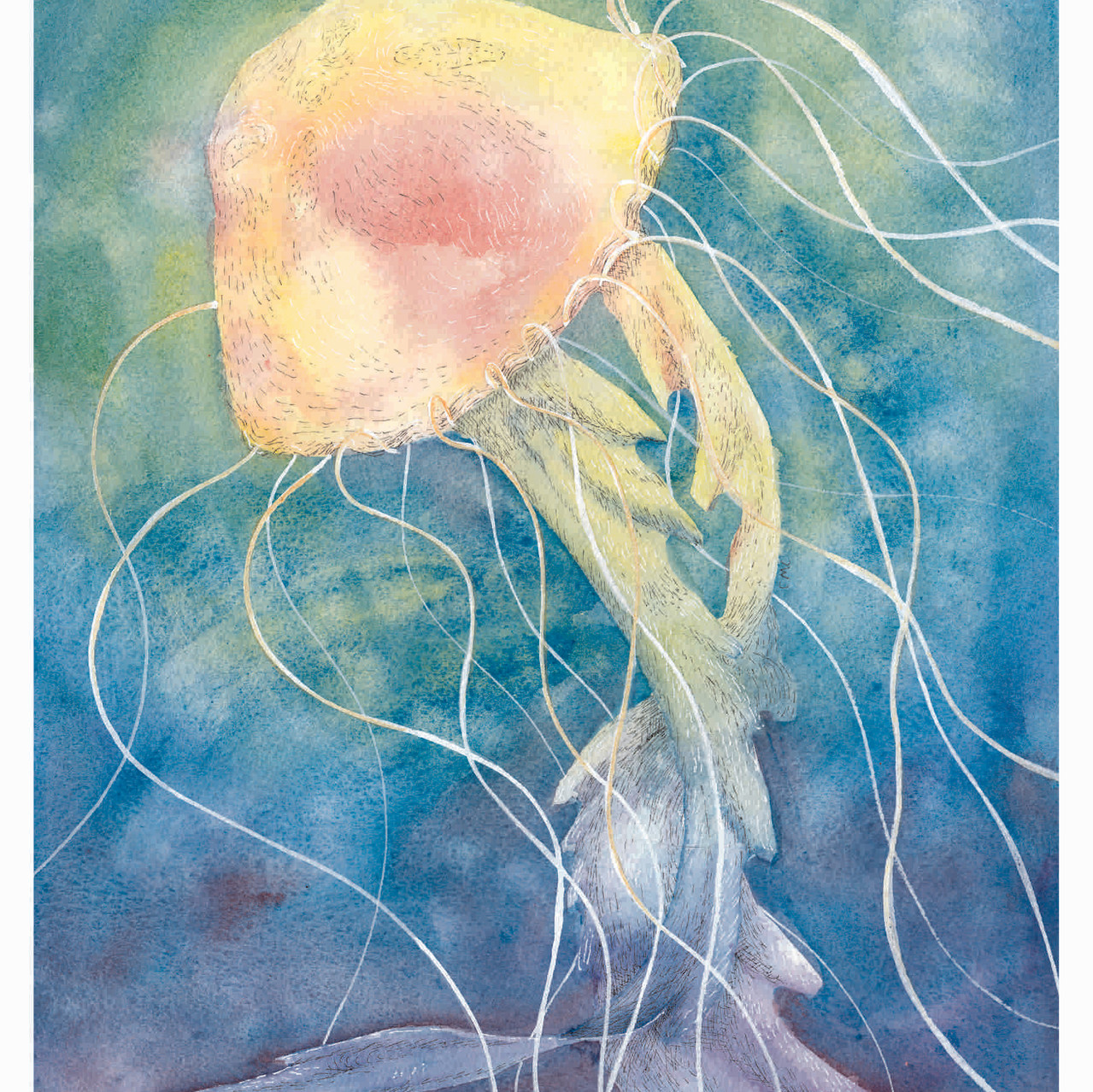 Jellyfish_Thumb