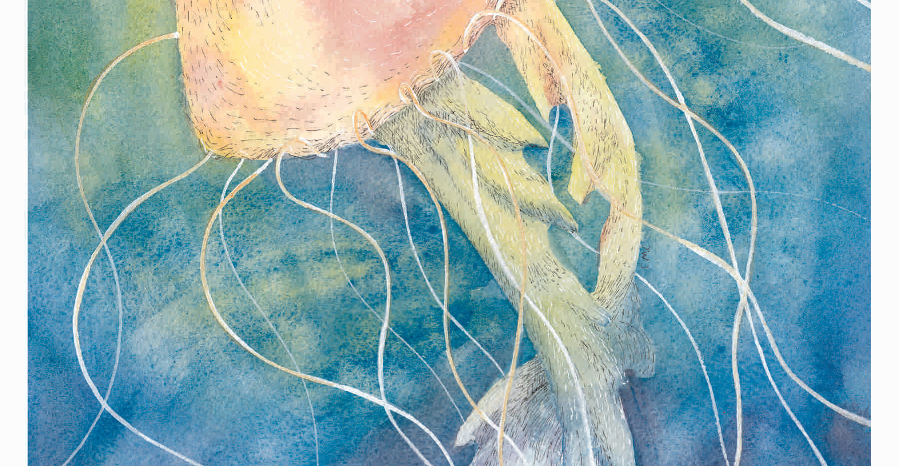 Jellyfish_Thumb.jpg