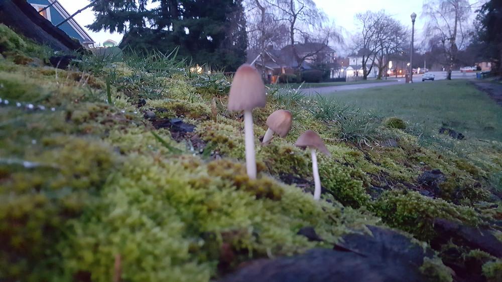 Mushrooms-on_Moss