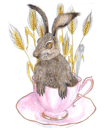 Hare in my Tea