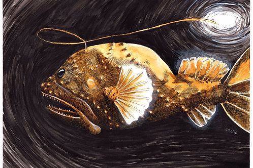 Guiding Light: Anglerfish 8x10