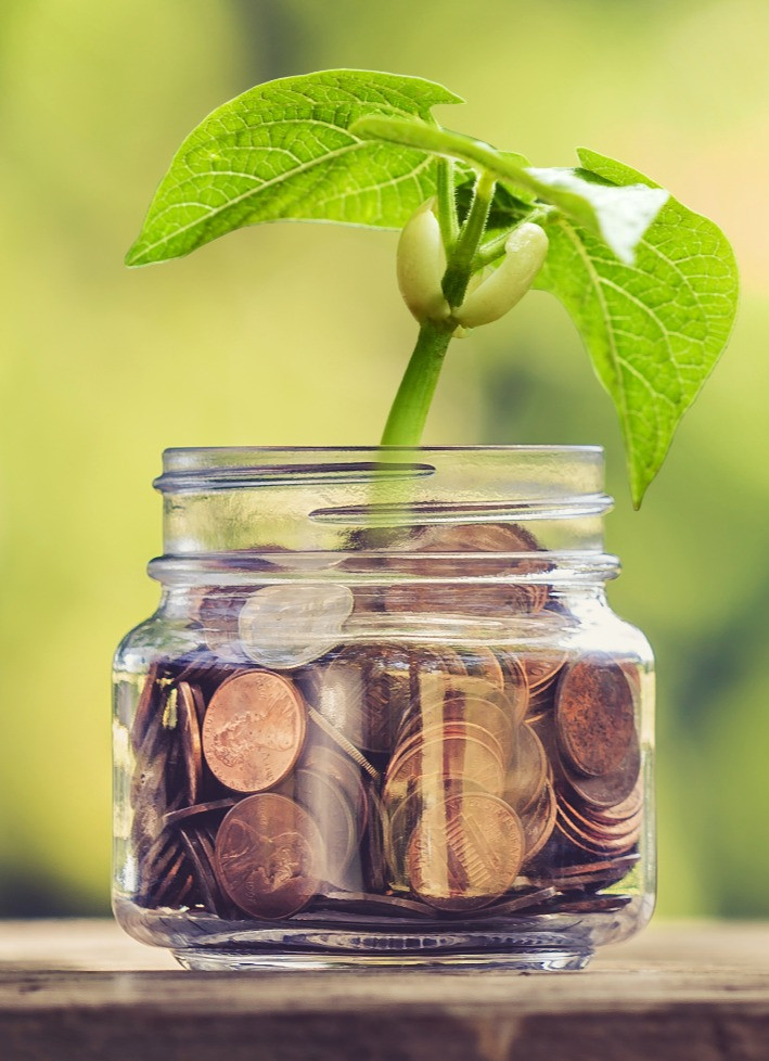Money in a jar with plant