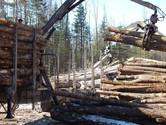Highland Farms Logging