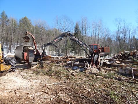 Western Maine logging services