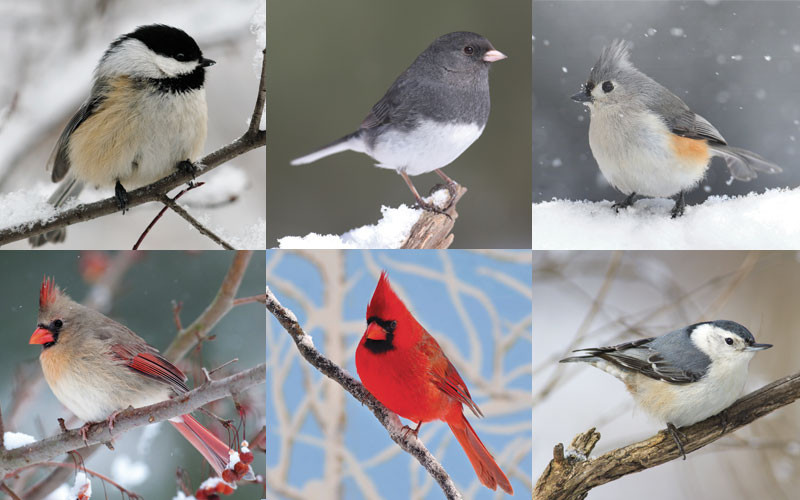 Maine winter birds