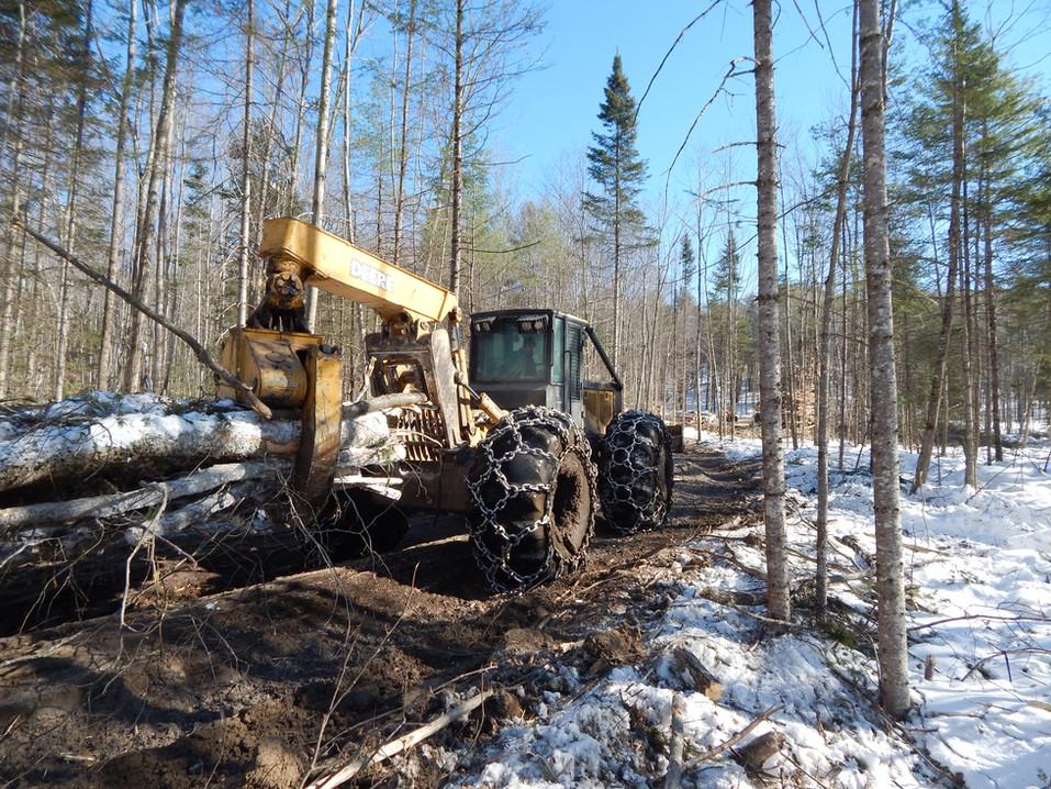 Maine logging
