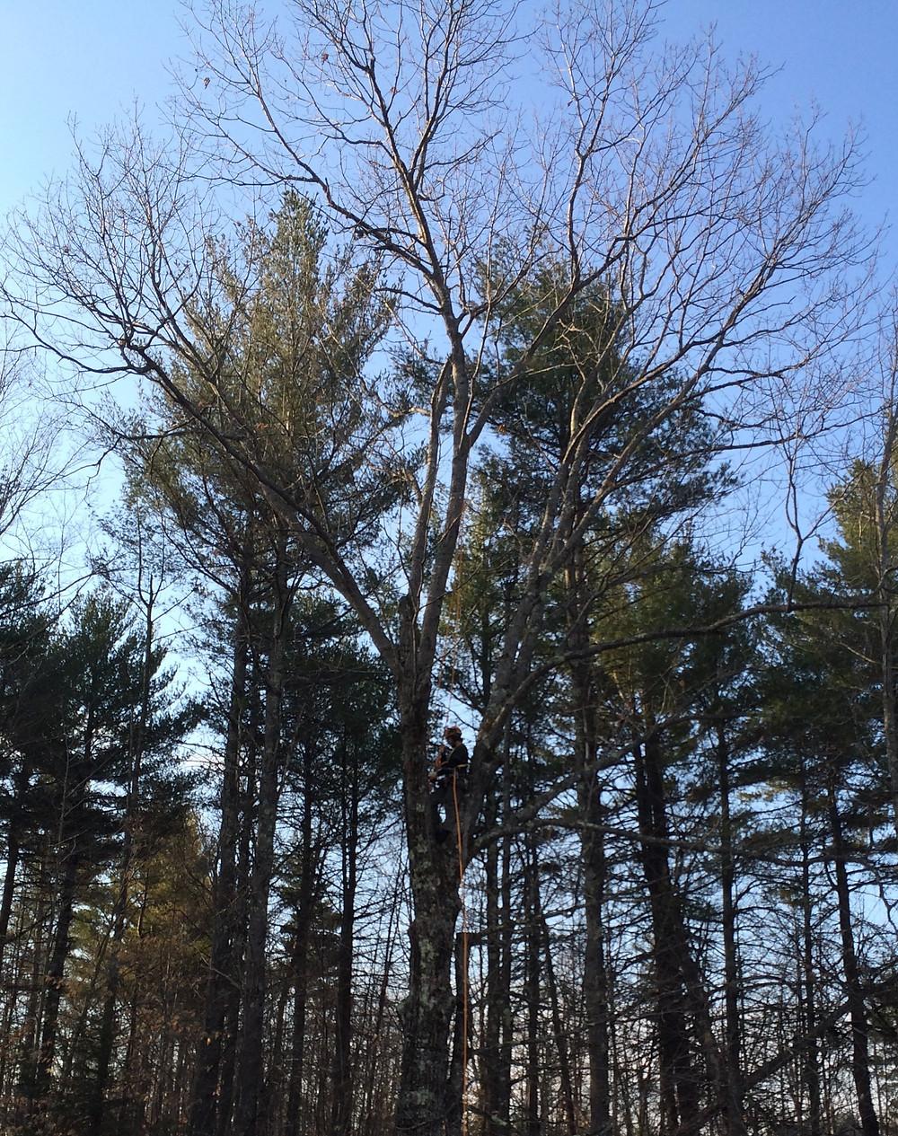 Donovan Tree Removal