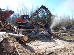 Maine timber harvesting