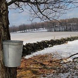 maplesugarbucket.jpg