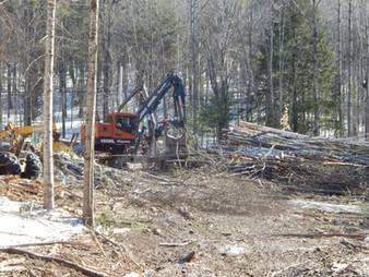 highland logging 042.JPG