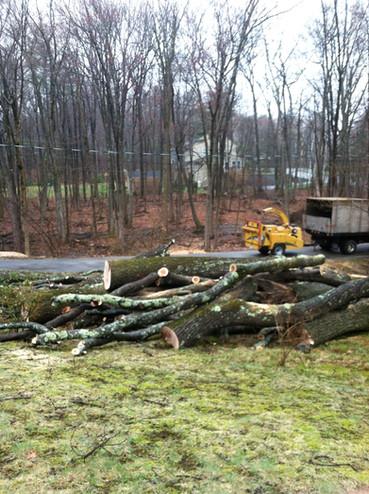 pile of cut logs