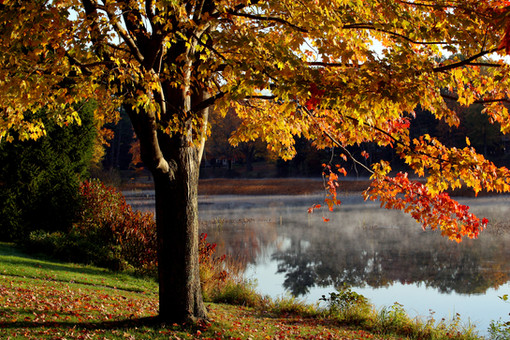 Sanford Springvale Fall