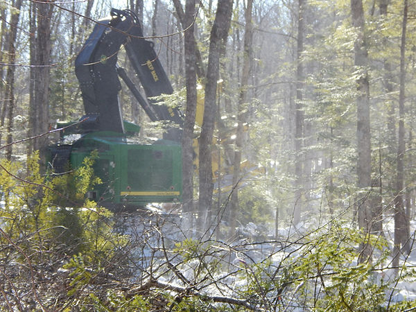 highland logging 014.JPG