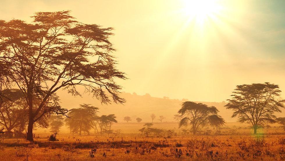 african savannah at sunrise.jpg