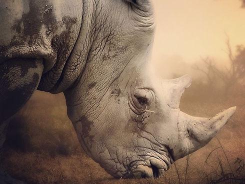rhino-east-africa.jpg