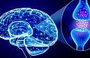adhd brain neuron.jpg