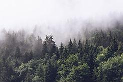 Forest Background.jpeg