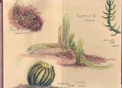 Cactus_Botánico_Madrid