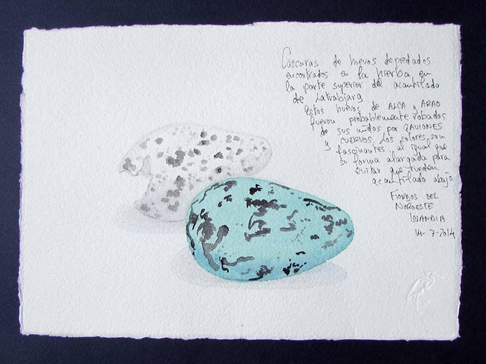 Huevos de Alca y Arao