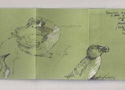 Apuntes aves marinas Islandia
