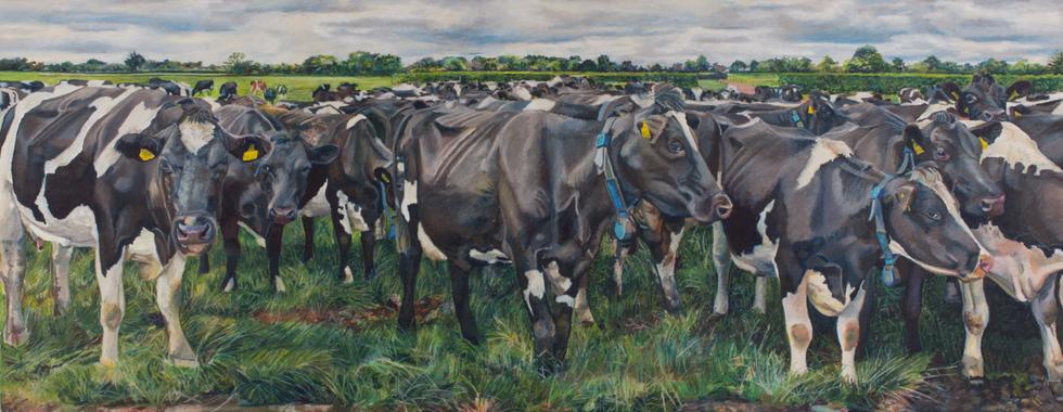 The Macnamara Herd