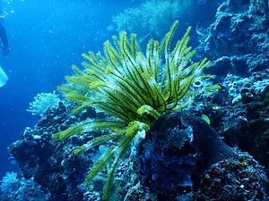 Canva - Green Coral Reef Under Water.jpg