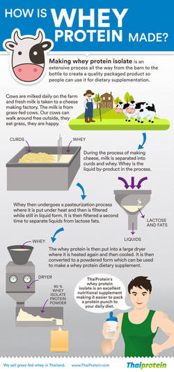 WHEY PROTEIN INFOGRAPHIC