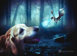 El perro y el dragón.
