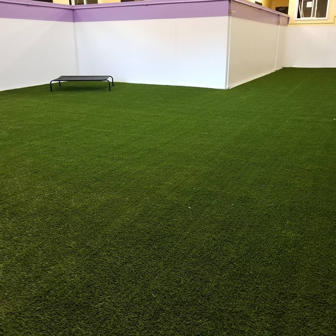 Green synthetic turf of a doggy daycare's play area with a black dog bed with white walls enclosing