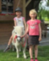 Ooievaarsnest_vakantieboederij_paarden2.