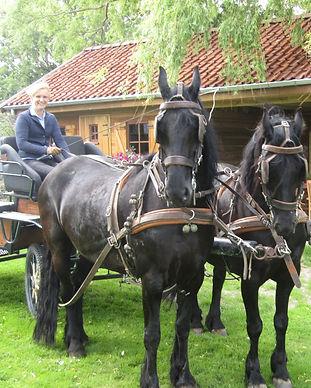 Ooievaarsnest_vakantieboederij_paardenko