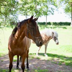 Hof ter Lo koets paarden