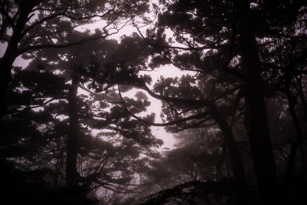 yakushima08web.jpg