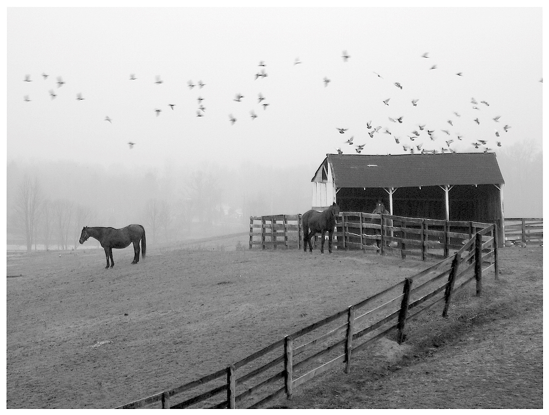 Taking Flight; Otisville, N.Y.