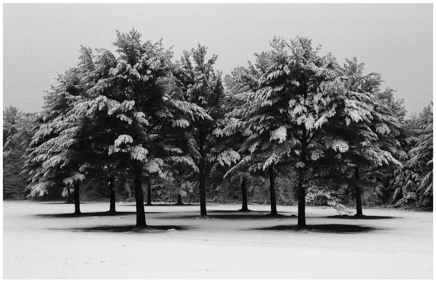 Tree Stand; Otisfield, Maine