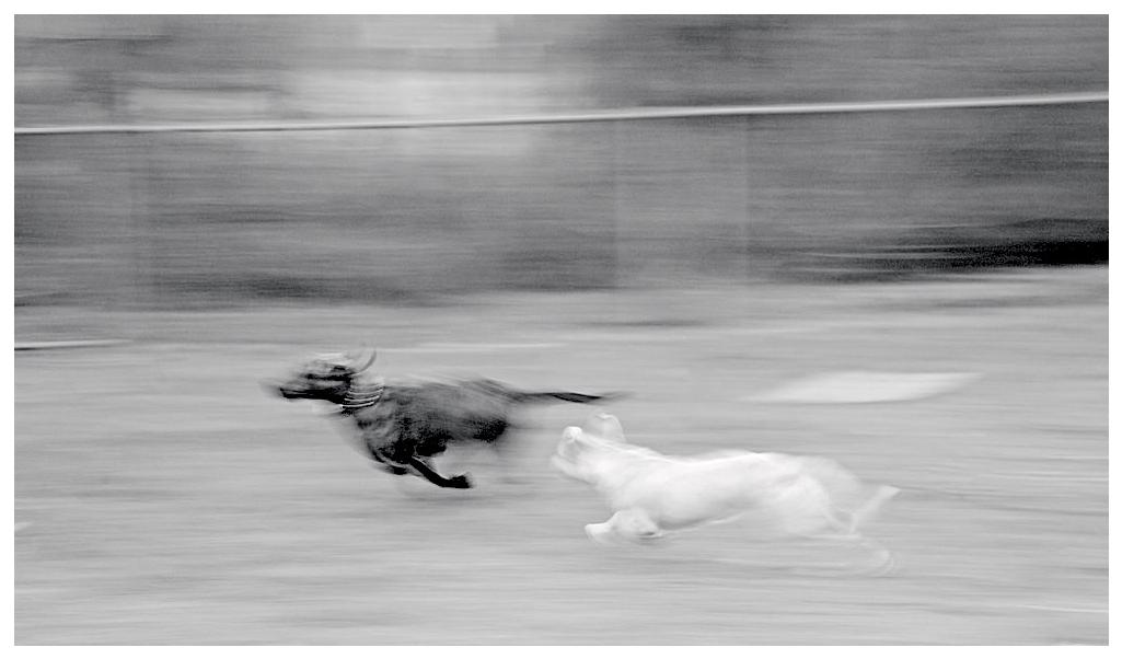 Speed; Wachapreague, Va
