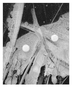 Ice Detail #45
