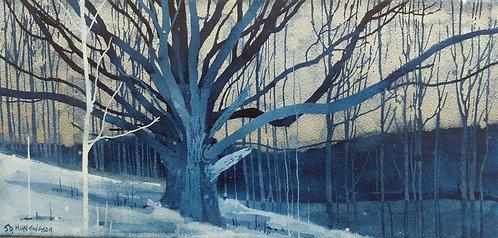 Geiger Oak From Farther Up Slope