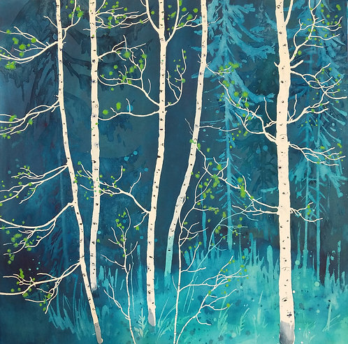 Aspen at the Edge of the Spruces 4