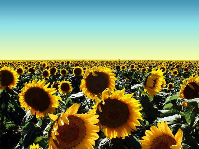 Spring Flowers: Allergies & Oral Health