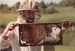 Inspecting 1982