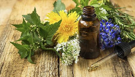 catgoria de plantas medicinais.jpg