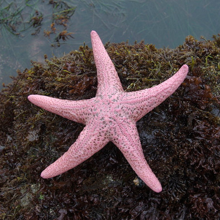 Social Justice and Starfish