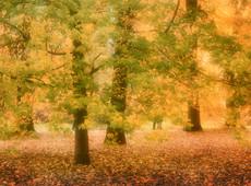 Autumn, Sheffield Park