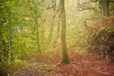 Woodland, Snowdonia