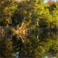 Wake Valley Pond Reflections II