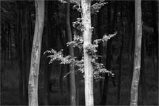 Tree, Springtime,  Friston Forest